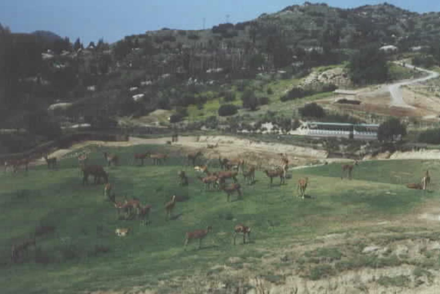 Wild Life Animal Park